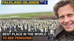 Explore Falkland Islands | Best Place in the World to see Penguins