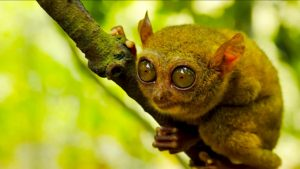 Top 17 most biodiverse travel destinations in the world