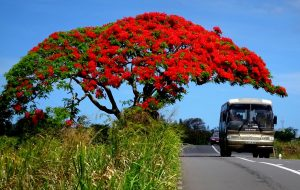 Dubreuil – A Remote Village of Mauritius